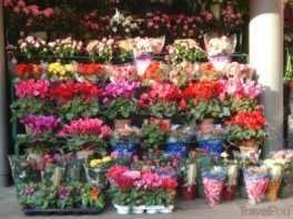 Kapoor Florist